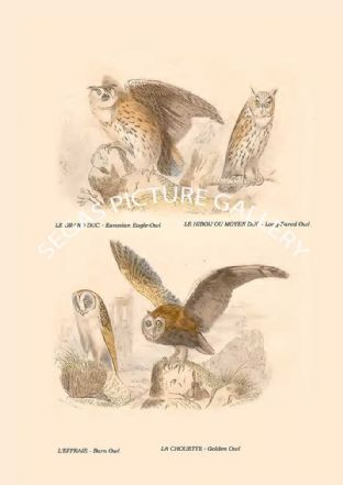 Eurasian Eagle-Owl, Long-Eared Owl, Barn Owl, Golden Owl